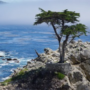 Big Sur and 17-Mile Drive