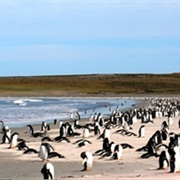 Bluff Cove Falklands