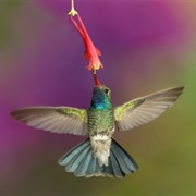 See Wild Hummingbirds