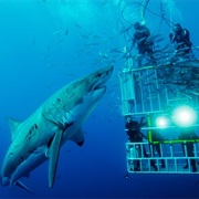 Dive With Sharks in South Africa