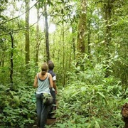 Go on a Rainforest Hike