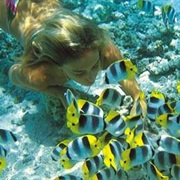 Go Snorkling in the Bahamas