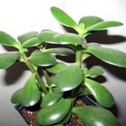 Non-Toxic House Plants for Children, Cats and Dogs on