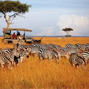 Do a Safari in Tanzania