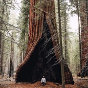 Adventure in Sequoia & Kings Canyon, USA