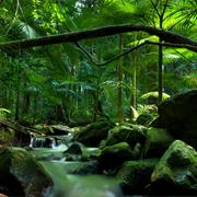 Daintree National Park (QLD)