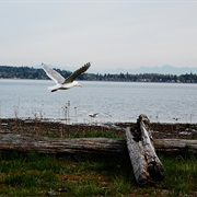Birch Bay State Park, Washington