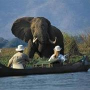 Mana Pools National Park, Zimbabwe