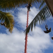 Costa Maya Flying Men