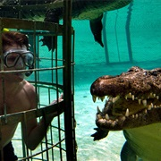 Cage Dive With Crocodiles