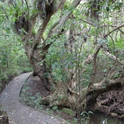 Shakespear Regional Park Walk - Very Easy ( 1 Hour 30 Mins to All Day)