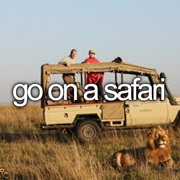 Go on a Safari