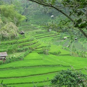 Traverse the Lush Rice Paddies in Bali, Indonesia