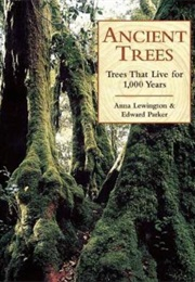 Ancient Trees: Trees That Live for 1,000 Years (Anna Lewington, Edward Parker)