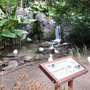 The Oasis Exhibits