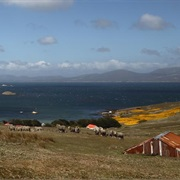 Carcass Island, Falklands