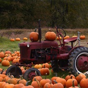 Go Pumpkin Picking!