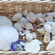 Collecting Shells and Stones