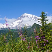 Mt. Rainier National Park (Washington State)