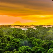 Discover The Amazon Rainforest and River