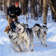 Go Dog Sledding