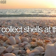 Collect Shells at the Beach