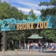 Bronx Zoo - New York City, NY