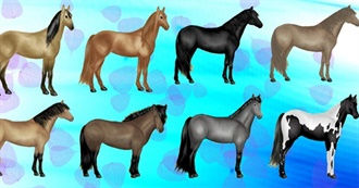 Collection of Quarter Horses