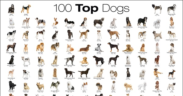 Top 100 Best Dog Breeds